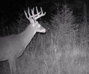 A Big Buck in Washington's Backcountry
