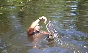 Video: Louisiana Swamp Guide Feeds Gators With His Mouth