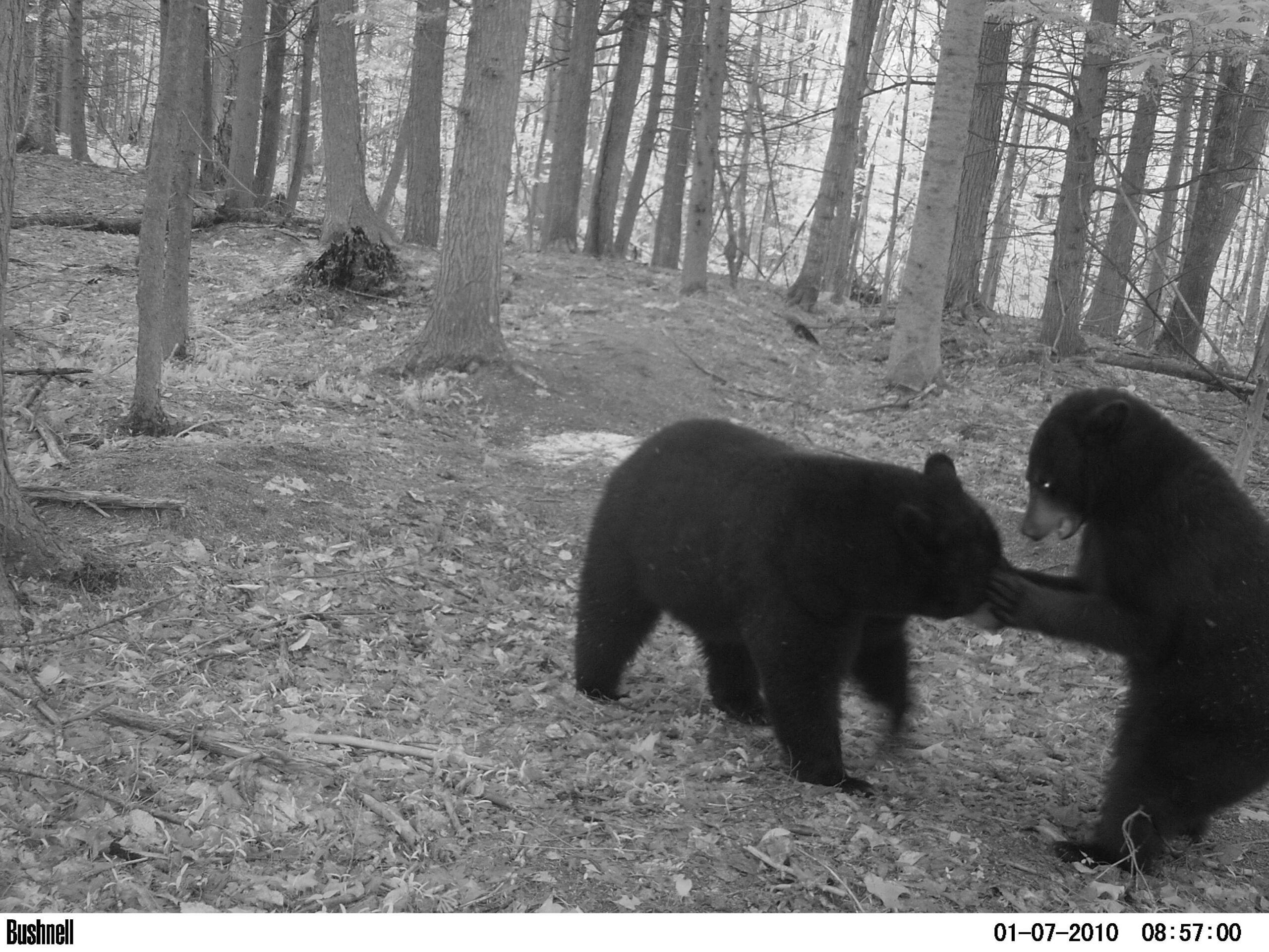 Send Us Your Photos, Win a Bushnell Trail Camera