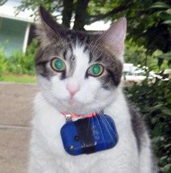 httpswww.fieldandstream.comsitesfieldandstream.comfilesimport2014importBlogPostembedHouse-cats-kill-more-critters-than-thought-2E20VUDG-x-large.jpg
