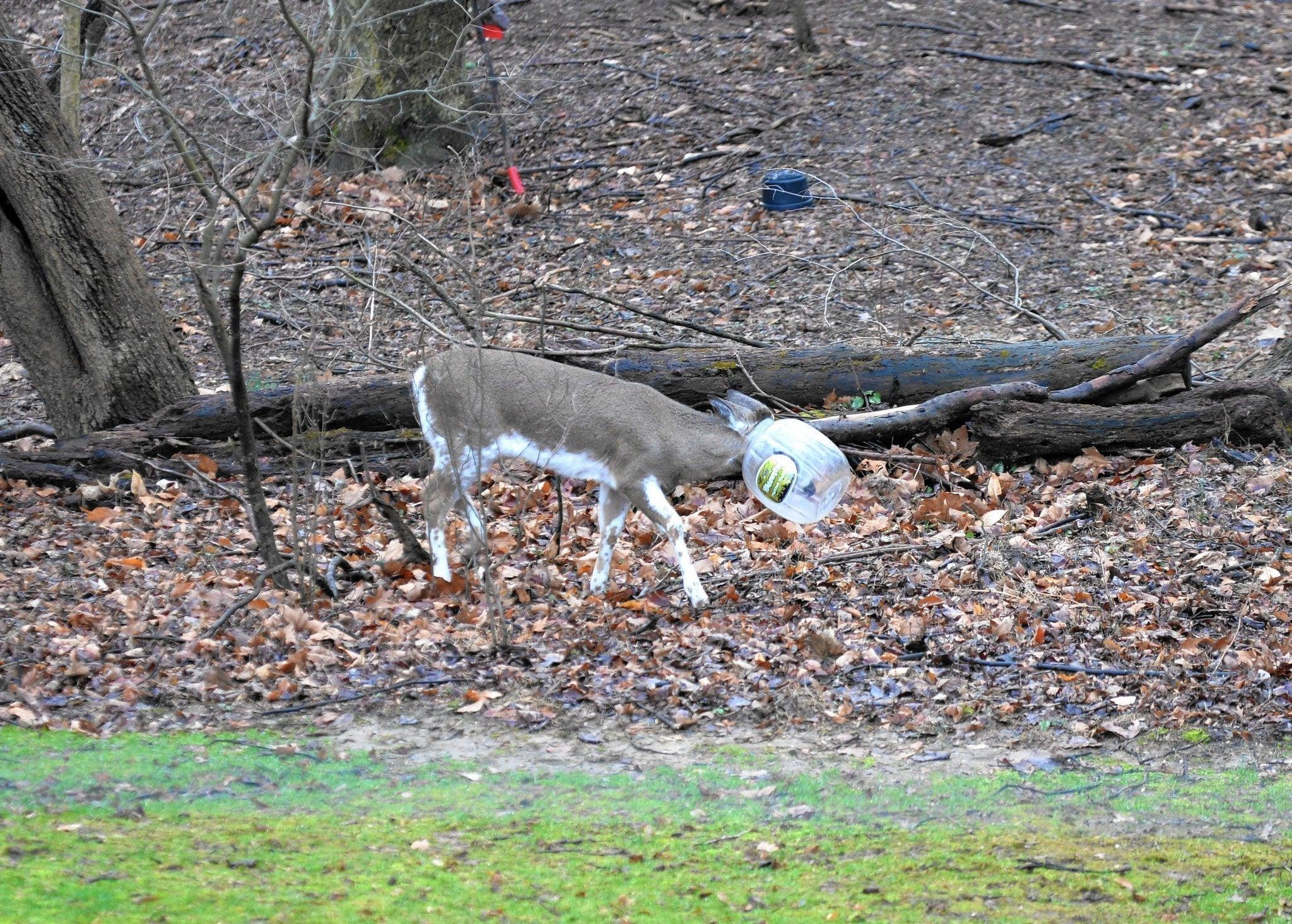 Video: Jughead the Deer Goes Free