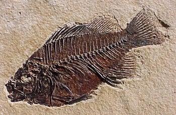 httpswww.fieldandstream.comsitesfieldandstream.comfilesimport2014importBlogPostembedpikespeak.fossil-fish.jpg