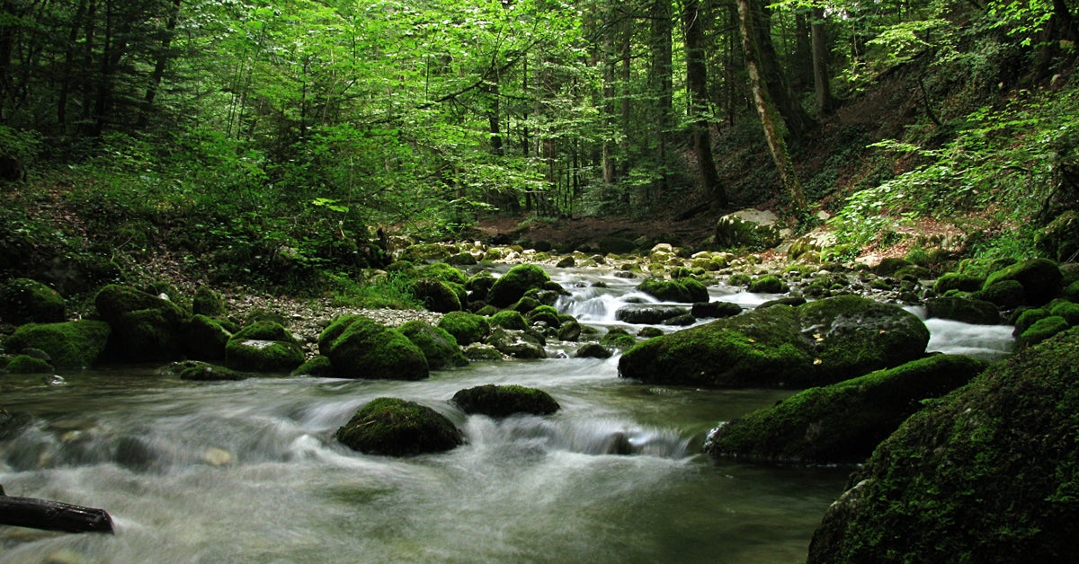 Poll Shows GOP and Tea Party Sportsmen Favor Clean Water Protections