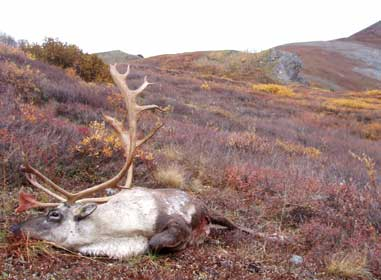 """Hunting"