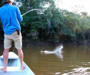 Rumble in the Jungle: Catching Huge Arapaimas on the Fly in Guyana