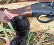 Hunting in South America, Part II