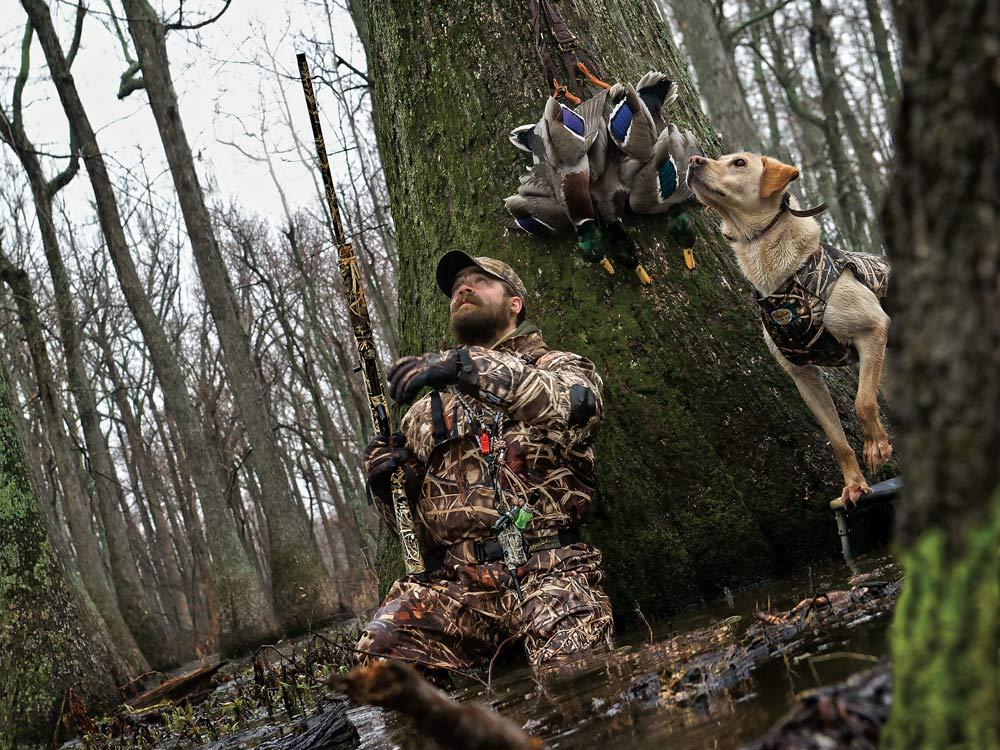 hunter and hunting dog mallards
