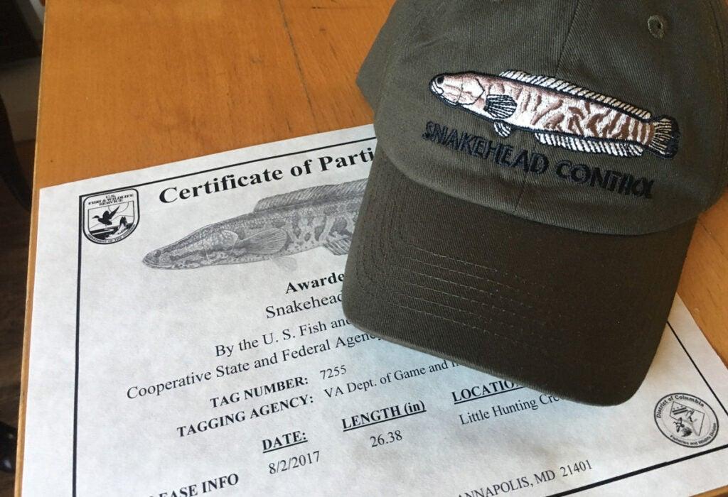 snakehead fishing, invasive species, Potomac River, Virginia, certificate