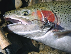 Are Hookless Trout Flies All The Rage?