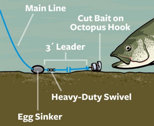 Go deep to catch landlocked striped bass all summer.