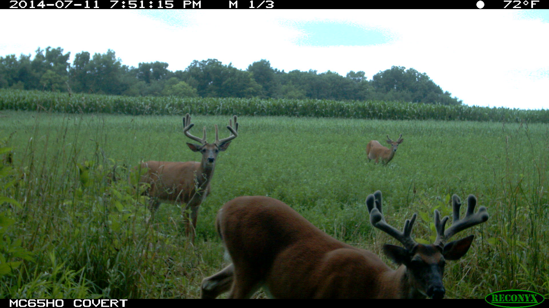 Crops, Deer Both Prime for Harvest