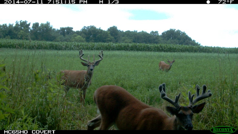 Crops, Deer Both Prime for Harvest