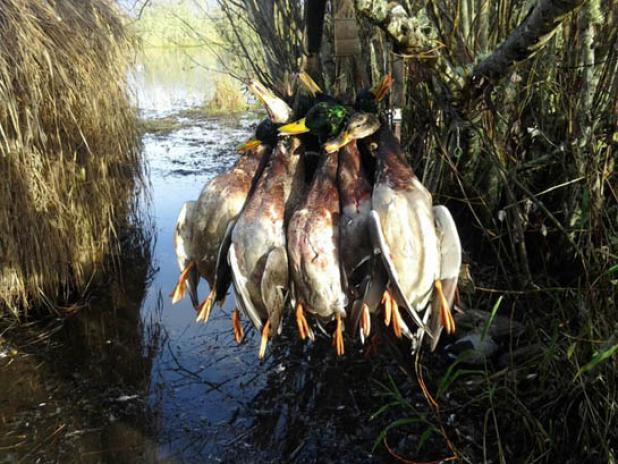 httpswww.fieldandstream.comsitesfieldandstream.comfilesimport2014importBlogPostembedOregon_Duck_Hunting.jpg