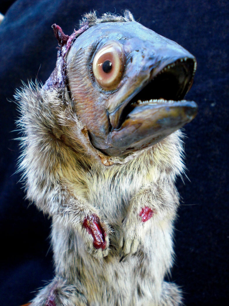 Sideshow Hoaxes and Artistic Freaks: A Creepy Collection of Rogue Taxidermy