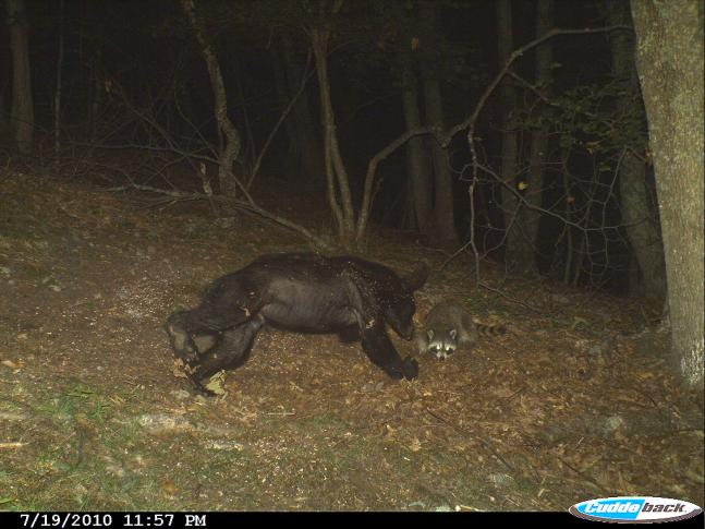 The 50 Best Trail Cam Photos of 2010