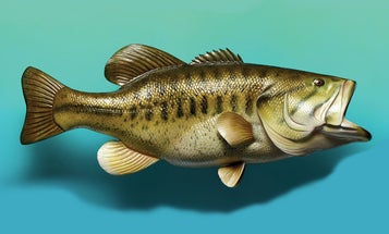 25 Bass Fishing Tips for Catching a 10-Pound Largemouth