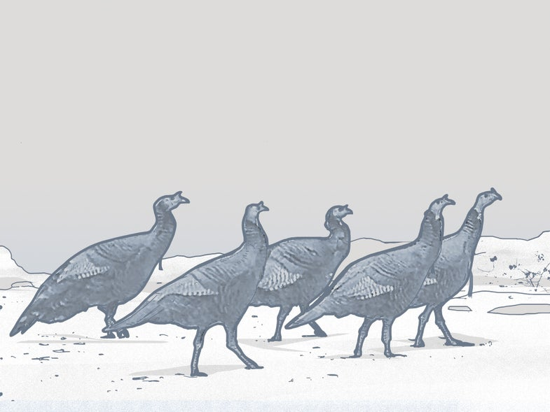 How Three Experts Kill Early-Season Gobblers