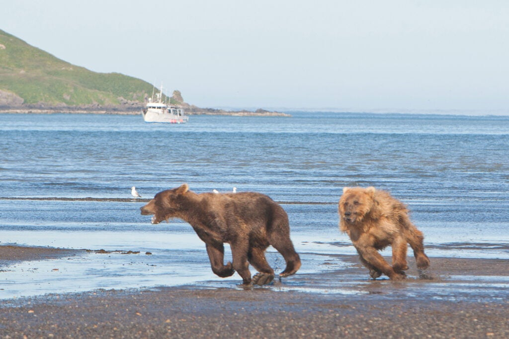 httpswww.fieldandstream.comsitesfieldandstream.comfilesimport2014importImage2011photo38356BARM_BearWars_Alaska_EXCL_016.jpg