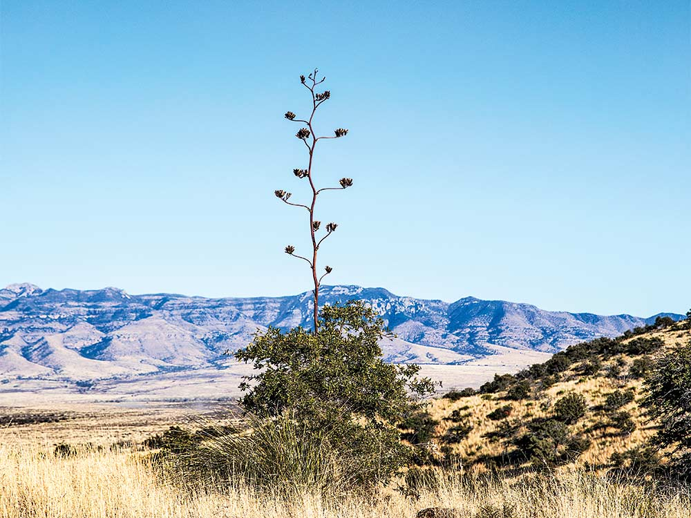standalone tree in new mexico