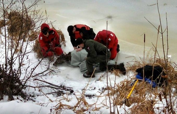 Firefighters Rescue Doe From Icy River in Maine