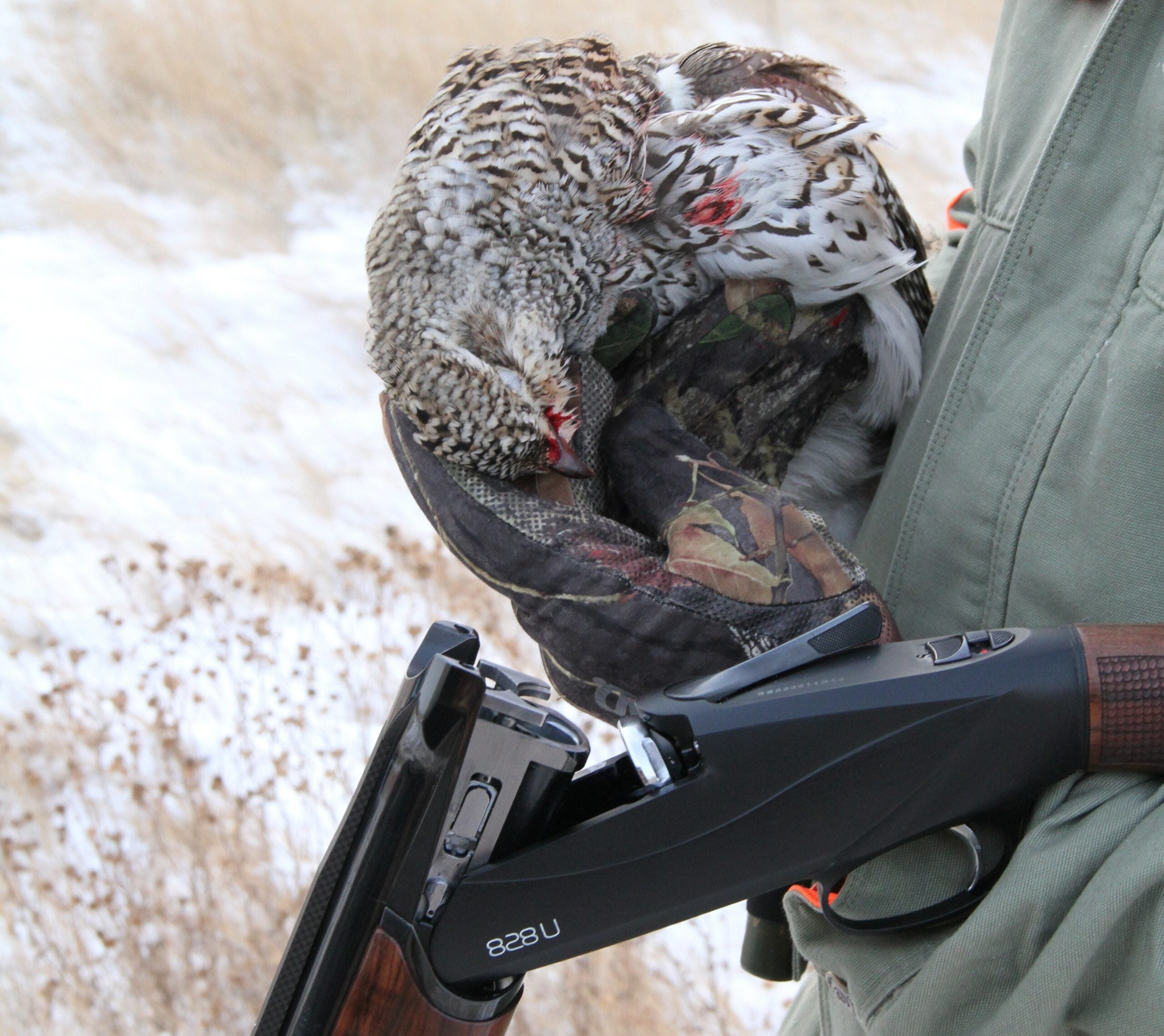 Why I Love Sharp-Tailed Grouse