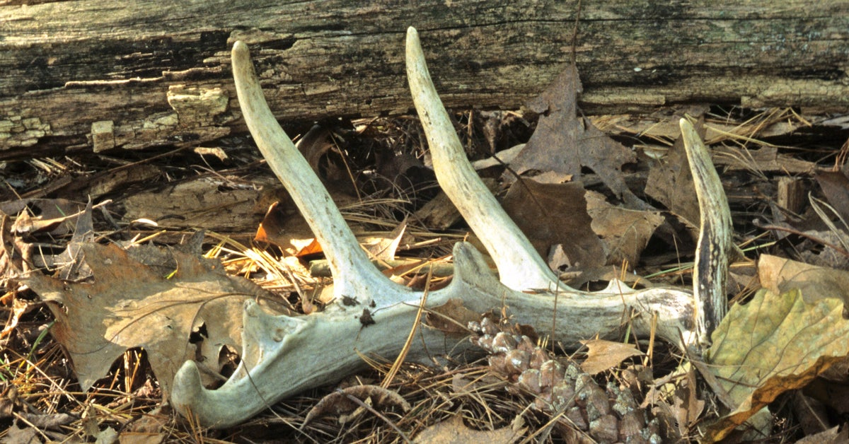 Bill Heavey: Shed Hunting and Divorce