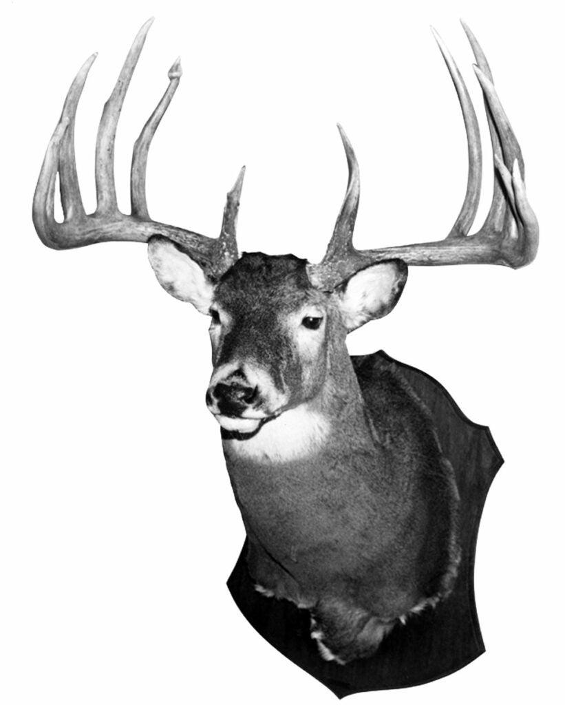 World-record whitetail deer
