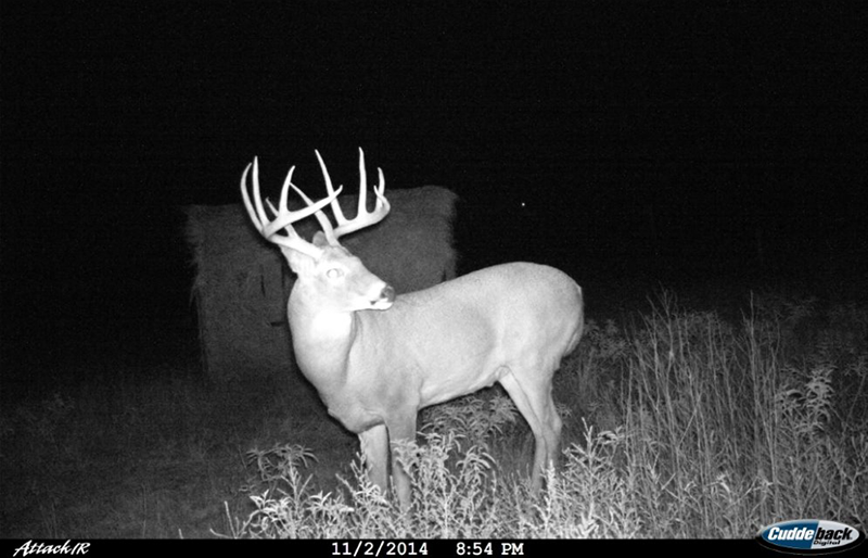 Cooler Weather Sparks an Uptick in Buck Movement