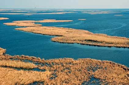 ducks, geese, goose, hunting, waterfowl, marsh, habitat loss, hurricane, rita, katrina