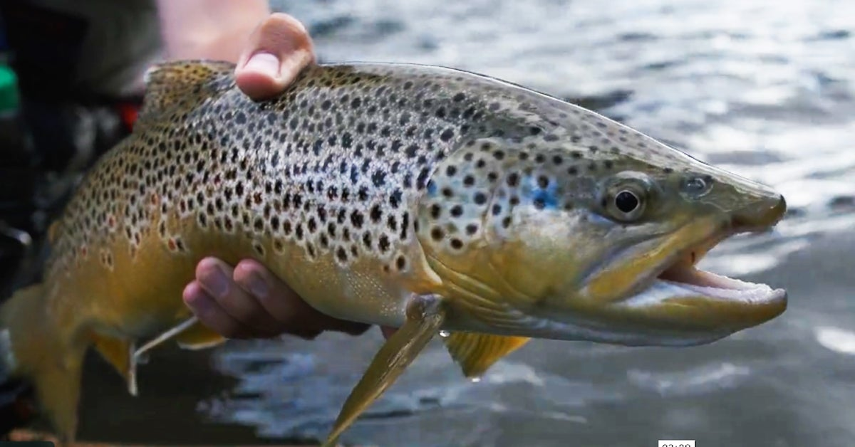 Fishing-Video Friday: The Gunnison Gorge and an Underwater Release Montage