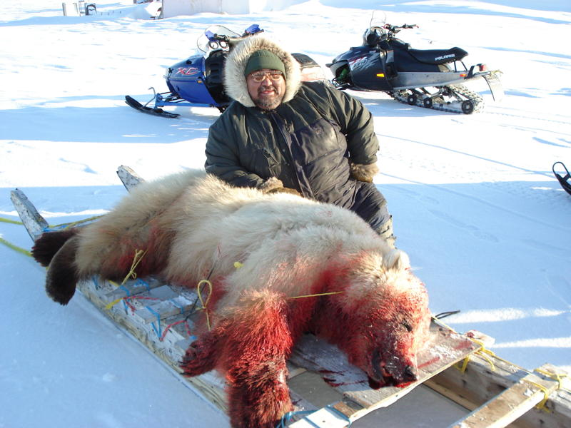 How an Inuit Subsistence Hunter Shot the Only Second-Generation Polar/Grizzly Hybrid Ever Confirmed in the Wild