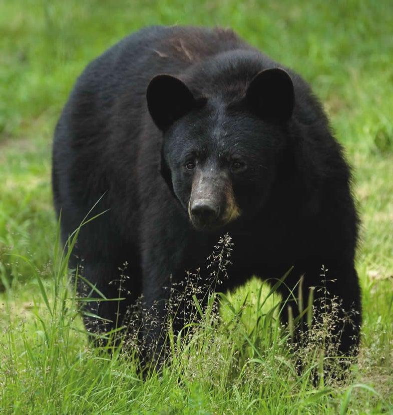 Black Bear Crashes Birthday Party in Alaska