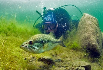 kirk deeter goes scuba diving underwater with largemouth bass during the spawn while they're on beds to see what they eat and learn about their spawning behavior in the spring