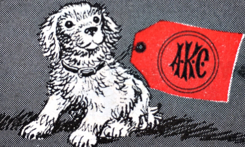 purebred dog litters