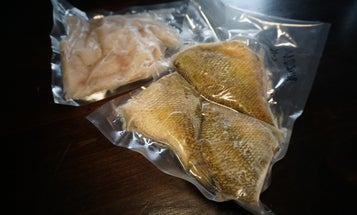 7 Tips on How to Freeze Fish