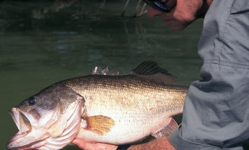 Why You Don't Catch Big Bass