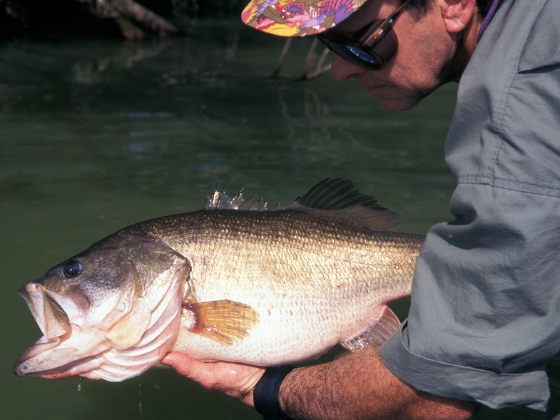 how to catch huge bass