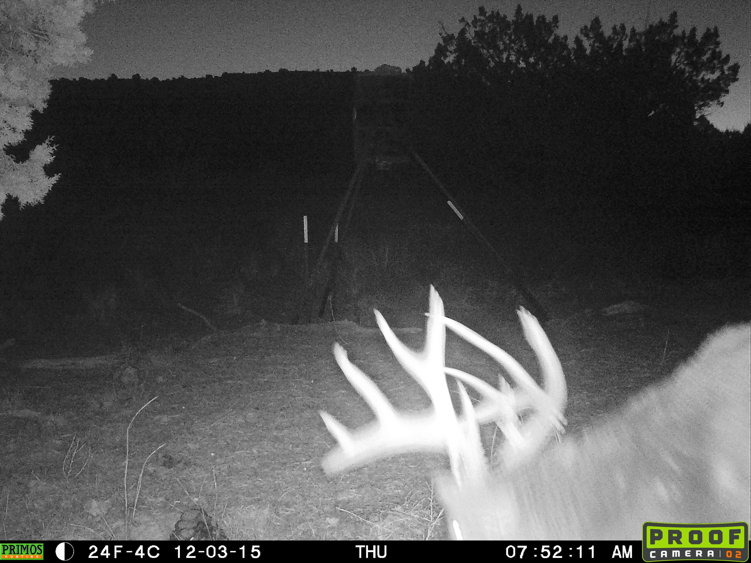 Giant Non-Typical Whitetail Makes a Late-Season Appearance