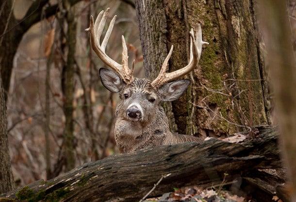 Grunt But Don't Rattle Turkey-Day Bucks