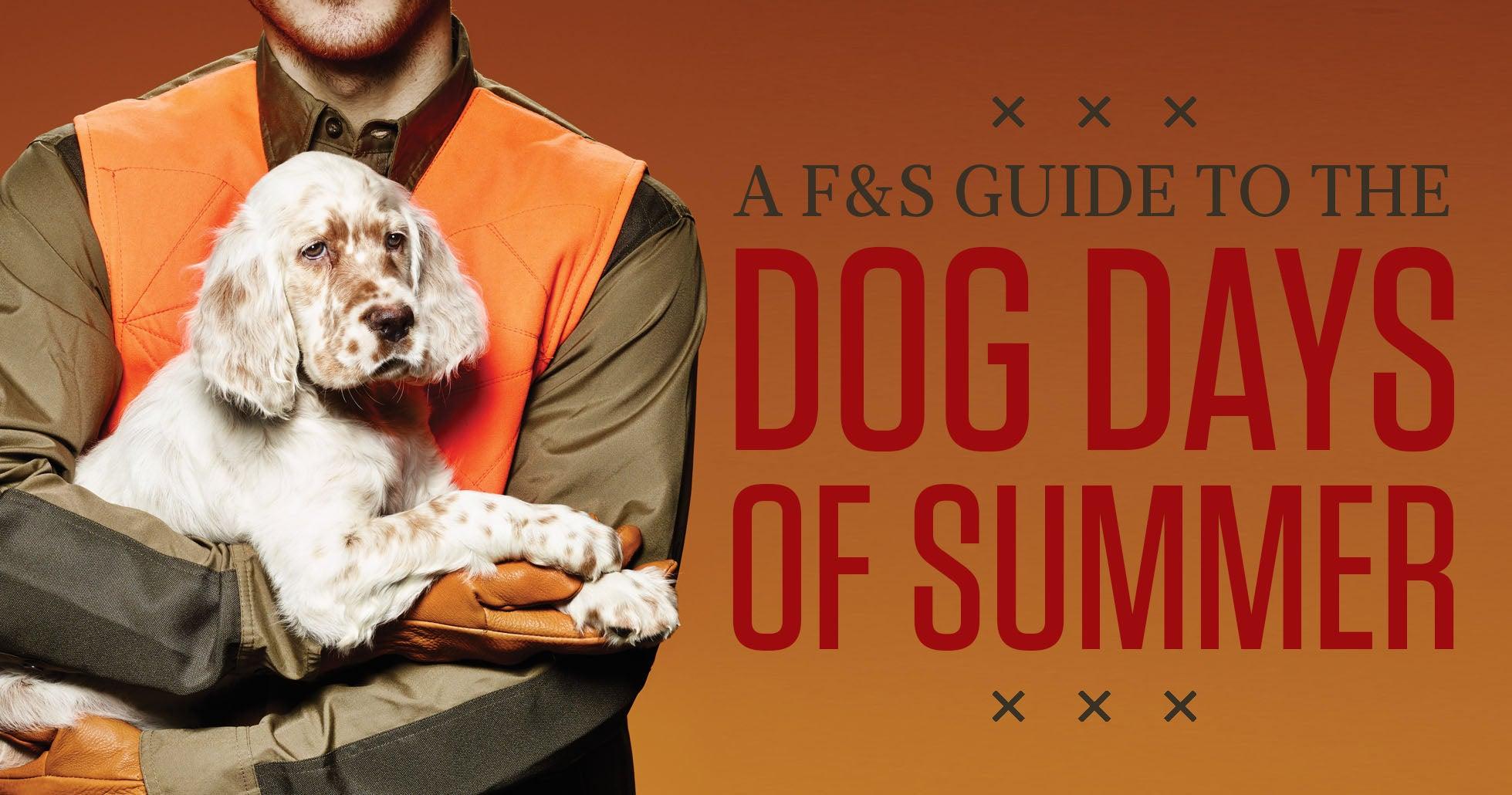 gun dog training, puppy training, summer puppy training, gun dog commands, teach gun dog commands, gun dog teaching aids