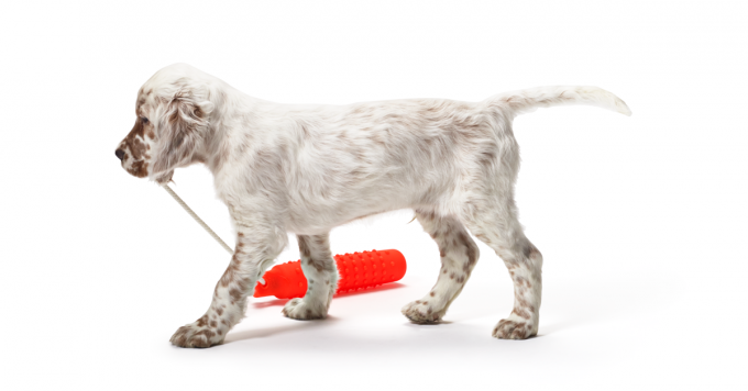 Teach Your Gun Dog the Fetch Command