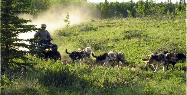 Puppy-Powered ATV Saves Cash at the Pump, Conditions Dogs