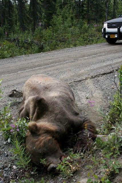 Signs of bear life