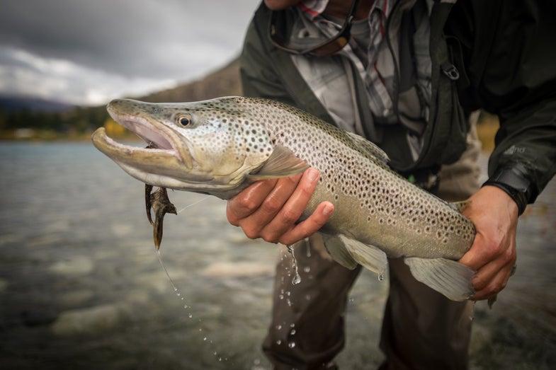 Do Streamers Make Fish Smaller?