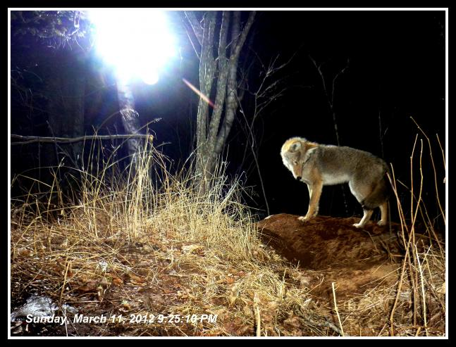 The Best of the 2012 Field & Stream Spring Trail Cam Photo Contest