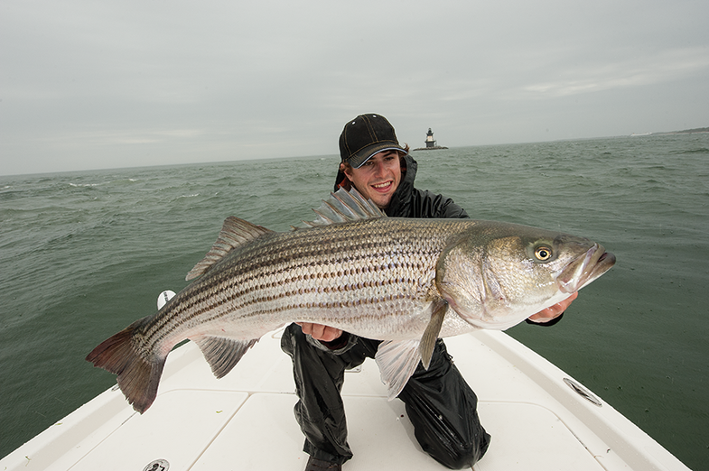 Striper Fishing: Trim the Fins on Your Live Bait