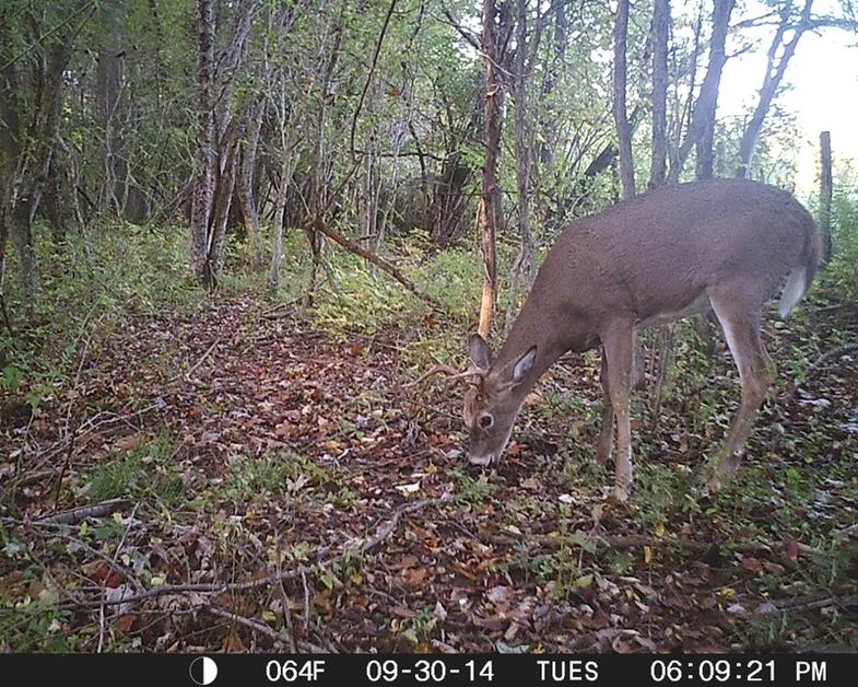 More Bucks on the Move