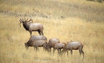 The 12 Best Cartridges for Elk Hunting