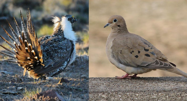 Audubon Report Says Climate Change Will Threaten Some Game Birds, Benefit Others