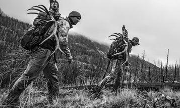 The Art of Stalking Elk on Public Land